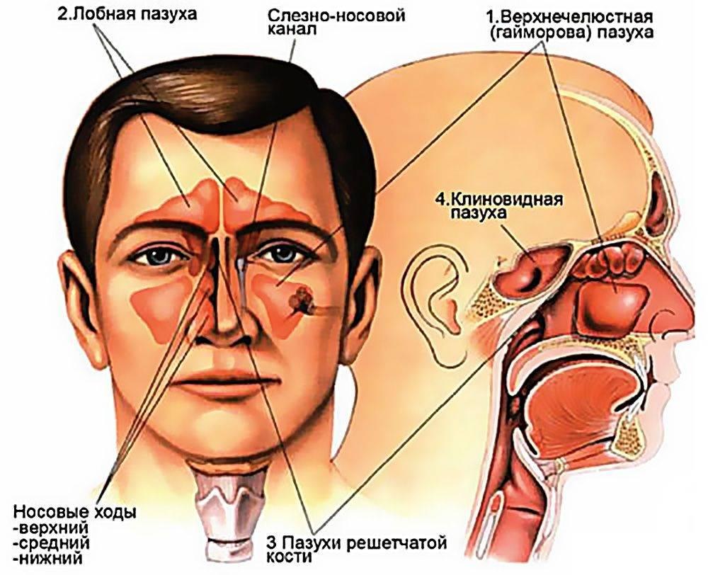 Устройство носа